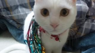 ネコのおもちゃ、パワーアップ